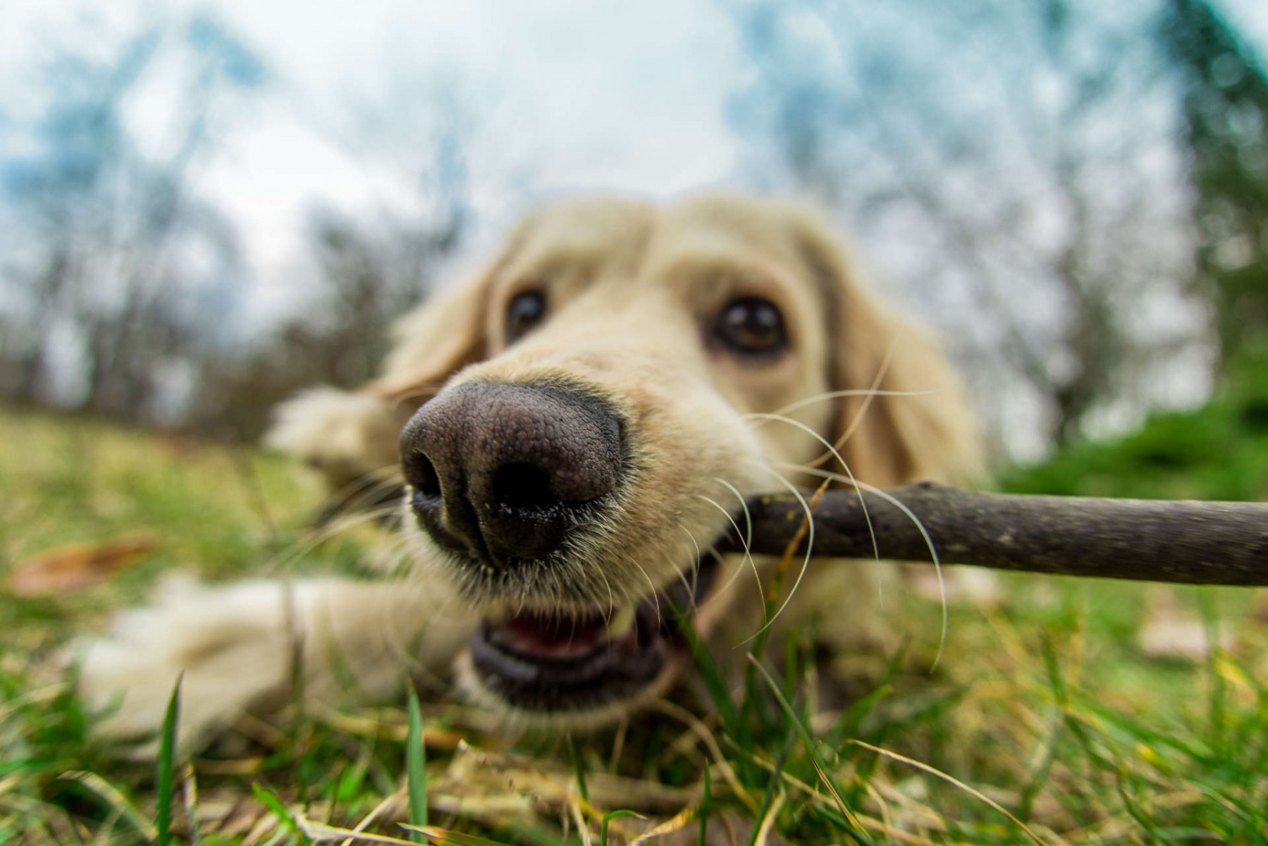 dog with stick in it's mouth
