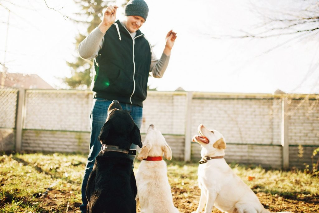 training aggressive dogs to socialize