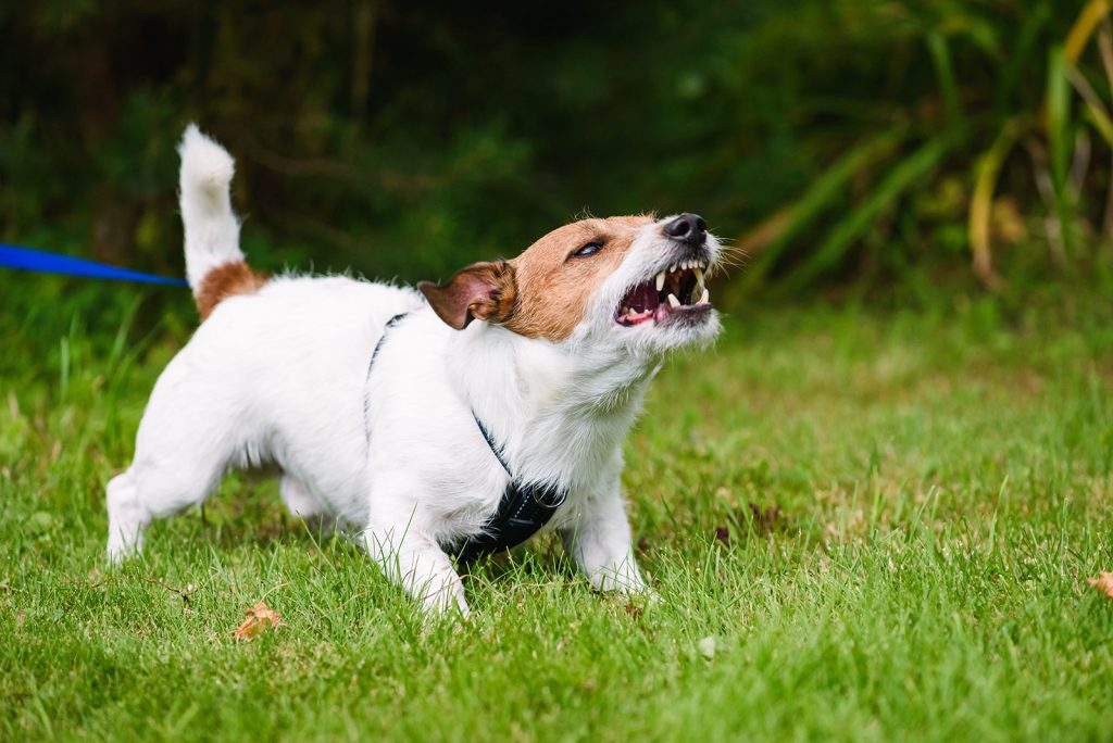 aggressive dog barking in park