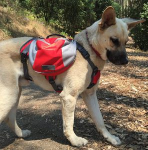 The-Best-Dog-Harness-For-Hiking