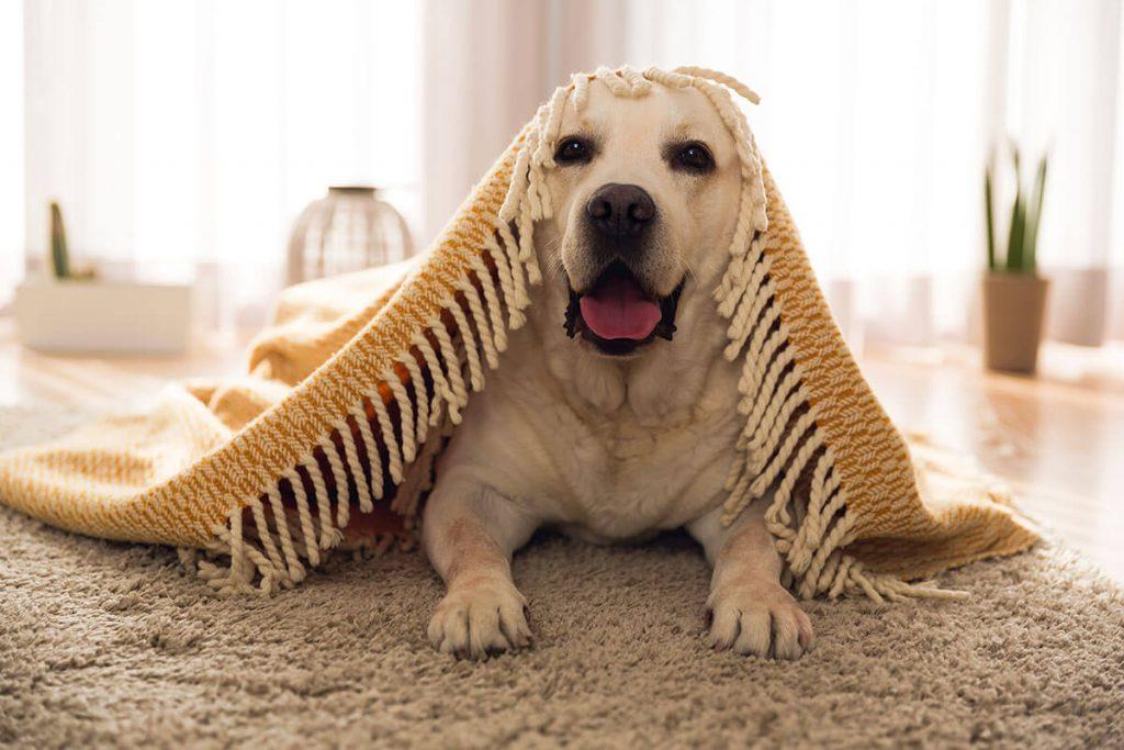cute-dog-at-home