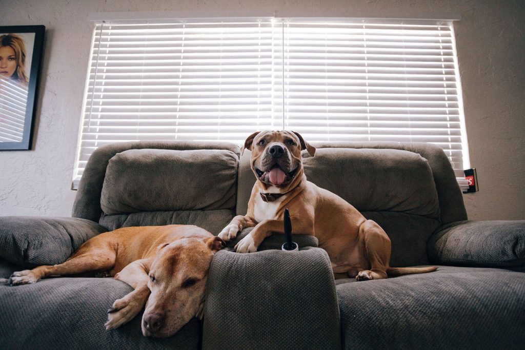 dogs-at-home