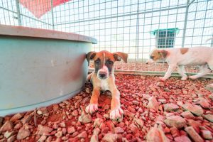 Rescue Dogs at a animal sanctuary Views around the Caribbean isalnd of Curacao
